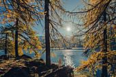 Herbstlicher Wald am Silsersee im Oberengadin, Sankt Moritz im Engadin, Schweiz, Europa
