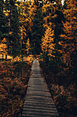 Autumn forest at Lej Nair, in the Upper Engadine, Engadin, Switzerland