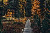 Herbstlicher Wald am Lej Nair, im Oberengadin, Engadin, Schweiz\n