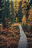 Herbstlicher Wald am Lej Nair, im Oberengadin, Engadin, Schweiz\n\n\n