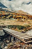 Herbstlicher Wald am Morteratschgletscher, Oberengadin, Engadin, Schweiz, Europa
