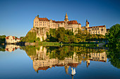 Sigmaringen Castle reflected in the Danube, swan in the foreground, Sigmaringen, Danube Cycle Path, Baden-Württemberg, Germany