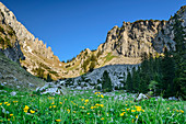 Blumenwiese mit Kenzenkopf im Hintergrund, Kenzenkar, Ammergauer Alpen, Schwaben, Bayern, Deutschland