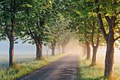 Morgennebel im Naturschutzgebiet Mönchbruch bei Mörfelden Walldorf, Hessen, Deutschland