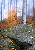Morgennebel im Felsenmeer im Herbst, Lautertal, Odenwald, Hessen, Deutschland