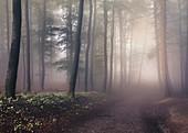 Morning fog in the Felsenmeer in summer, Lautertal, Odenwald, Hessen, Germany