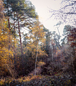 Autumn in the forest, Odenwald, Hessen, Germany