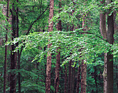 Detail of a tree in the forest, Odenwald, Melibokus, Hessen, Germany