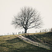 Tree in the field in winter, Odenwald, Hessen, Germany
