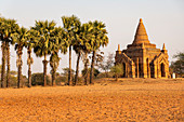 Temples and palm trees in the evening light, near Minnanthu village, Bagan, Myanmar