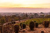 Abendstimmung am Red Mountain Weingut, Inle See, Heho, Myanmar