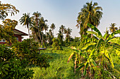 Nature view with grass and palm trees on Koh Kret, Bangkok, Thailand