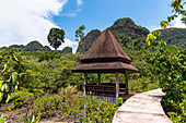 Jungle path at the Tha Pom Klong Song Nam springs. Krabi region, Thailand