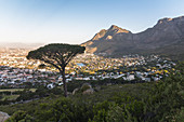 View from Signal Hill viewpoint over Cape Town in the evening light, South Africa