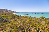Lagoon with turquoise water in West Coast National Park, Western Cape. South Africa