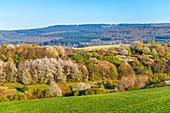 View to the Erbeskopf, Hunsrück National Park, Rhineland-Palatinate, Germany