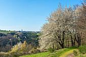 View of Beuren, Hunsrück, Rhineland-Palatinate, Germany