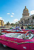 Vintage pink cars and their drivers are waiting for customers in front of the Capitol, Old Havana, Cuba