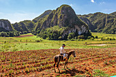 "Rider with a cigar in the Vinales Valley (""Valle de Vinales""), Pinar del Rio Province, Cuba"
