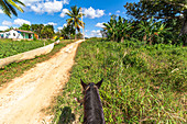"Horse riding in the Vinales Valley (""Valle de Vinales""), Pinar del Rio Province, Cuba"