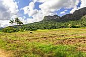 """Landscape on hiking trail """"Los Aquaticos"""" in the Vinales valley (""""Valle de Vinales""""), Pinar del Rio province, Cuba"""