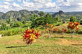 """View from the viewpoint """"Los Aquaticos"""" over the Vinales valley (""""Valle de Vinales""""), Pinar del Rio province, Cuba"""