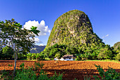 "High round karst rock on hiking trail in the Vinales valley (""Valle de Vinales""), Pinar del Rio province, Cuba"