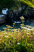 View of the small harbour of Porthgain on the Pembrokeshire Coast, Wales, UK.