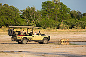 A safari vehicle and passengers very close to a couple of lions, panthera leo, drinking at a water hole.