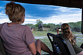 Two people in a safari jeep, a woman and a teenage girl using a video camera taking footage of a mature elephant