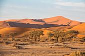 Dune landscape in Sossusvlei in the morning light, Sesriem, Namibia