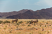 Antelope next to road D707 in desert of Namibia on route to Sesriem, Namibia