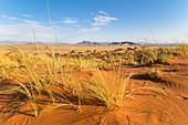 View from Elim Dune in the evening light, Sossusvlei, Sesriem, Namibia