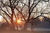 Mystische Gegenlichtaufnahme einer Baumgruppe in der Morgenstimmung, Frühnebel, Oberbayern, Bayern, Deutschland, Europa