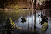 The Würm at Gauting. Detailed pictures of the river Würm with driftwood, tree trunks and rapids. Quaint and natural landscape. Gauting, Starnberg, Upper Bavaria, Bavaria, Germany, Europe