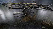 Broken branches lie in the worm, long exposure. Gauting, Starnberg, Upper Bavaria, Bavaria, Germany, Europe