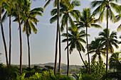 Tropische Vegetation mit Palmen in der Abenddämmerung, Yanuca Island, Fiji