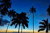 Late dusk with a view of palm trees and the tropical sky, Savusavu, Fiji ISlands
