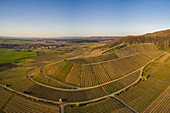 Vineyards at Abtswind, Kitzingen, Lower Franconia, Franconia, Bavaria, Germany, Europe