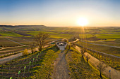 Sunset in the vineyards at Abtswind, Frankenblick, Kitzingen, Lower Franconia, Franconia, Bavaria, Germany, Europe