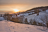 The Vogelsang vineyard at Einersheim market in winter, Possenheim, Kitzingen, Lower Franconia, Franconia, Bavaria, Germany, Europe