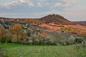 View of the Vogelsang vineyard at Einersheim market in the evening light, Possenheim, Kitzingen, Lower Franconia, Franconia, Bavaria, Germany, Europe
