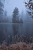 Winter birch lake on the Schwanberg, Rödelsee, Kitzingen, Lower Franconia, Franconia, Bavaria, Germany, Europe
