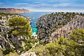 France, Bouches-du-Rhône, National park of Calanques, Marseille, 9th district, creek of En-Vau and the plateau of Castel Vieil, in the background the Cap Canaille