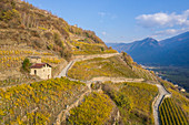 Terraced vineyards of San Giacomo in Teglio, Sondrio Province, Valtellina, Lombardy, Italy, Europe