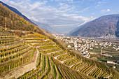 Terrassenförmig angelegte Weinberge und das Dorf Bianzone, Provinz Sondrio, Valtellina, Lombardei, Italien, Europa