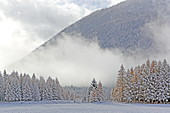 Lärchenwiesen landscape protection area in the first snow, late autumn on the Mieminger Plateau, Tyrol