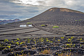 Las Palmas province, Lanzarote, Canary islands, Spain, Europe. Volcanic vineyard