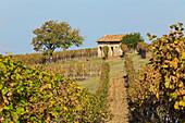Monferrato, Asti district, Piedmont, Italy. Autumn in the Monferrato wine region,ancient small farmhouse\n