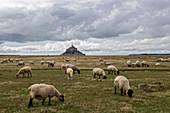 Mont-Saint-Michel, Normandie, Frankreich, Landschaft des Mont-Saint-Michel mit dem Dorf im Hintergrund und Schafen im Vordergrund